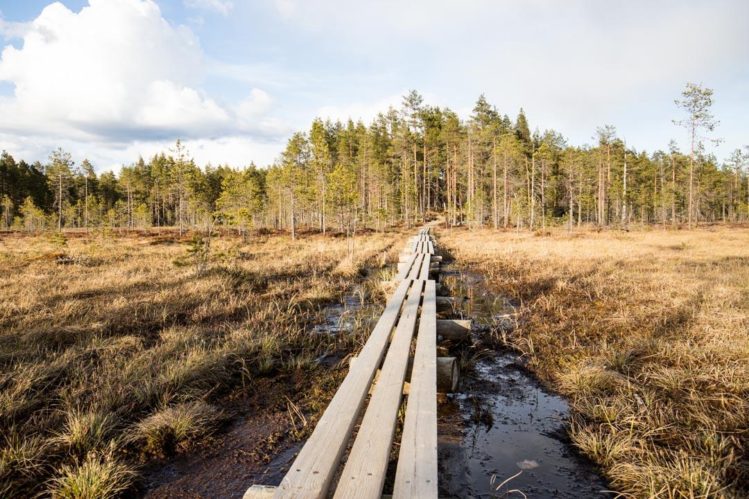 suo Helvetinjärven kansallispuistossa