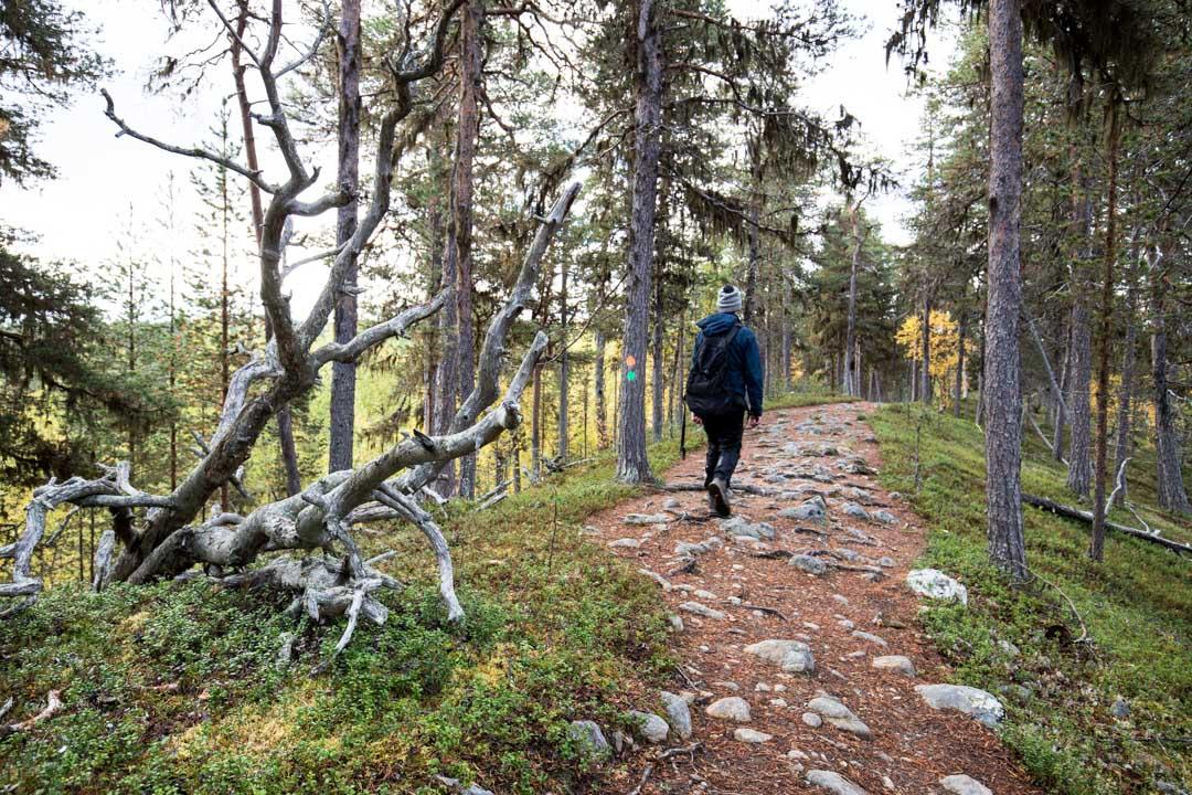 patikoimassa Lemmenjoen kansallispuiston luontopolulla