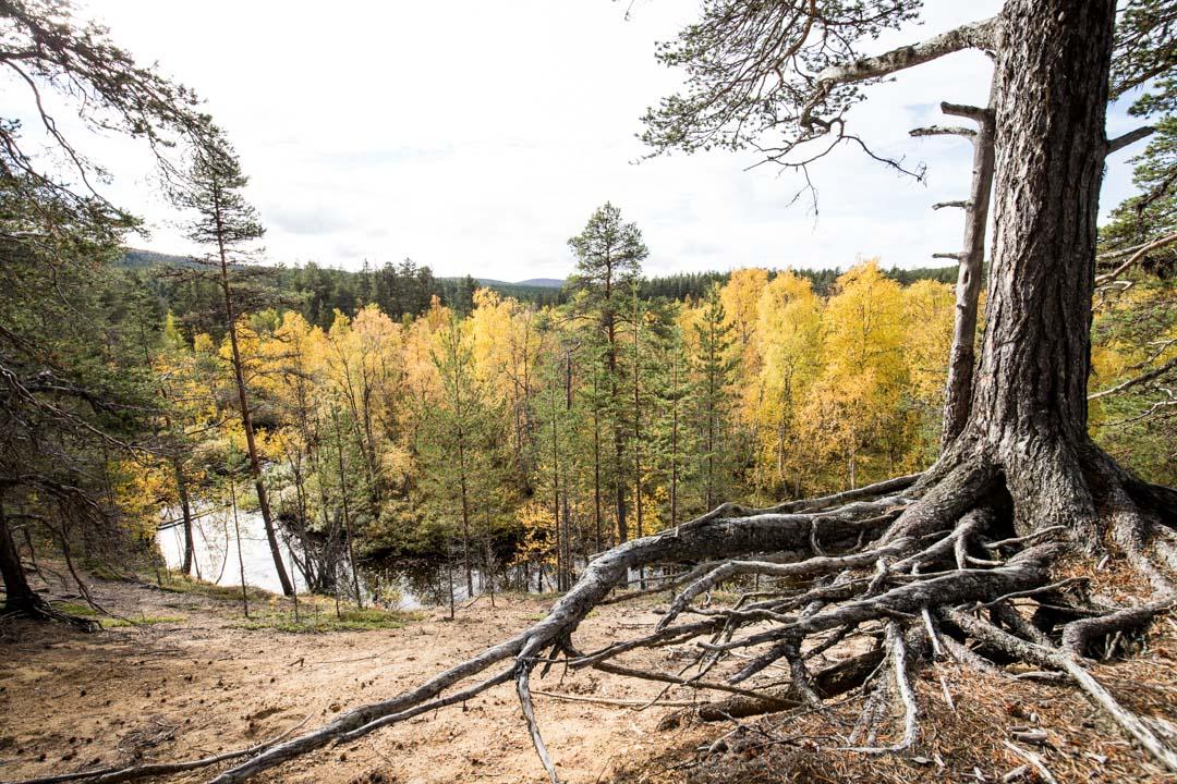 vaeltamassa ruska-aikaan Lemmenjoen kansallispuistossa Jokivarren retkeilyreitillä