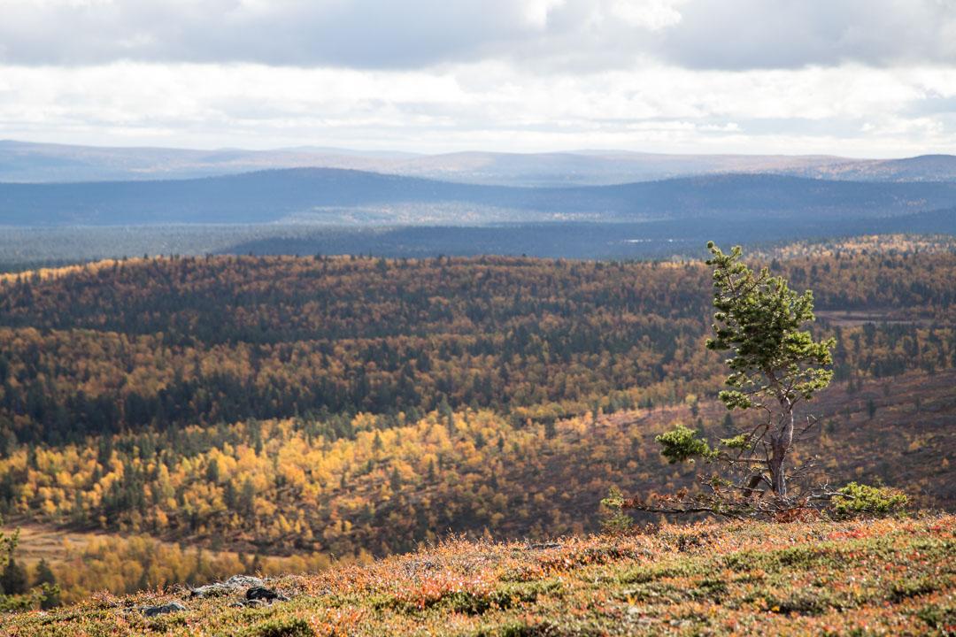 ruskaa Lemmenjoen kansallispuistossa