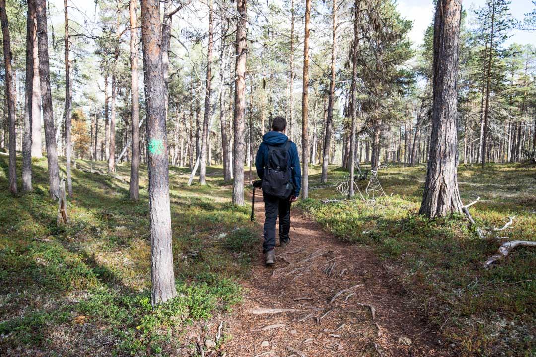 Lemmenjoen kansallispuiston luontopolku