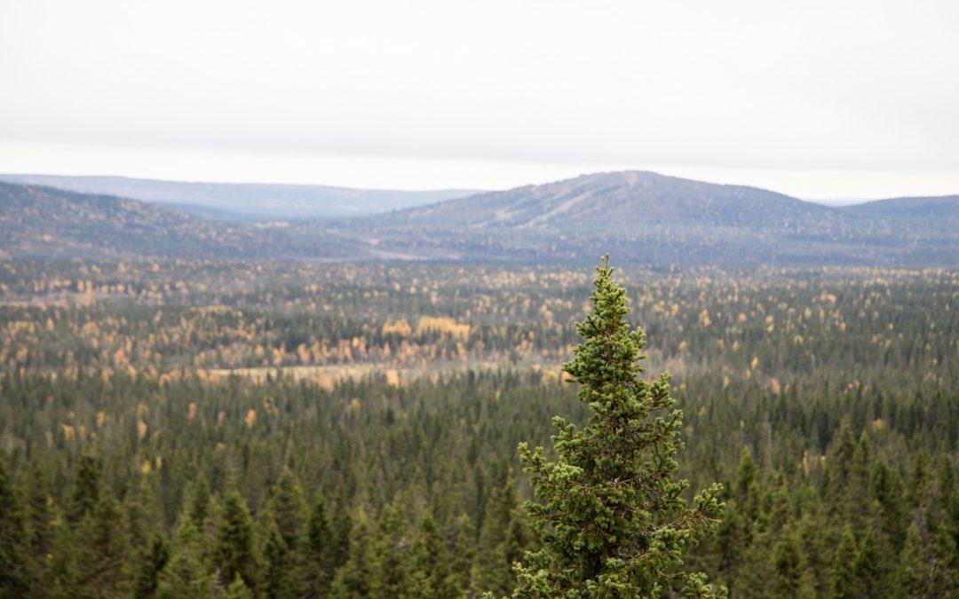 Syötteen kansallispuisto – kauniita metsä- ja suomaisemia Ahmankierroksella