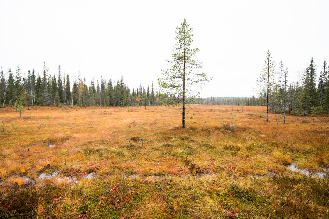 suomaisemaa Rytivaaran kierroksella Syötteen kansallispuistossa