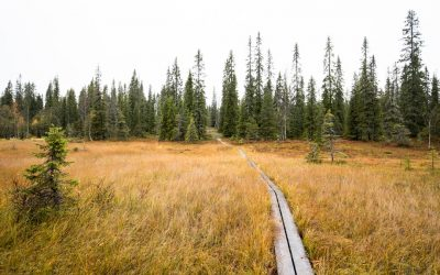Syötteen kansallispuisto – tutustumista kansallispuiston luontoon ja historiaan Rytivaaran kierroksella