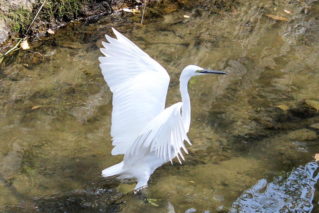 lintu filosofin polulla Kiotossa Japanissa