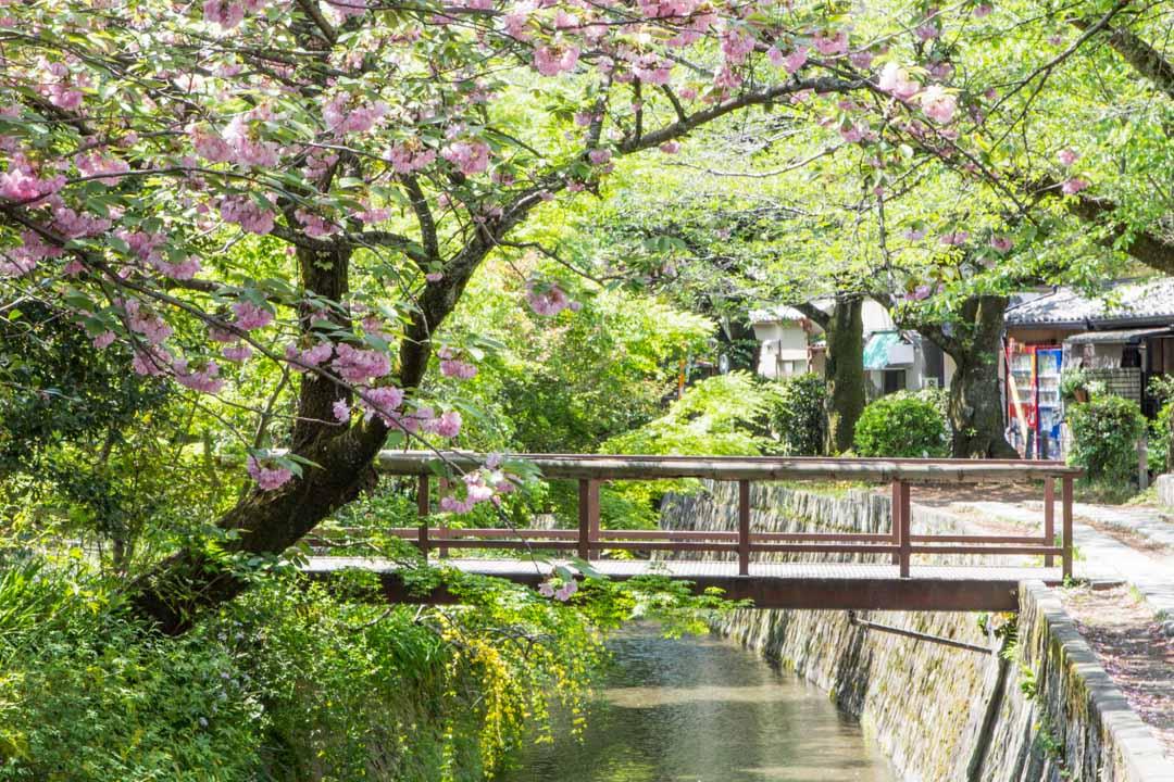 Filosofin polku Kiotossa Japanissa