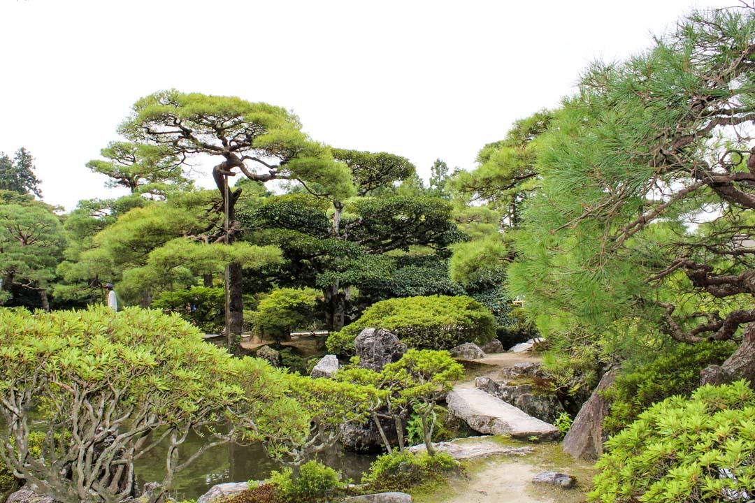 Hopeisen paviljongin temppelin puutarha Kiotossa Japanissa