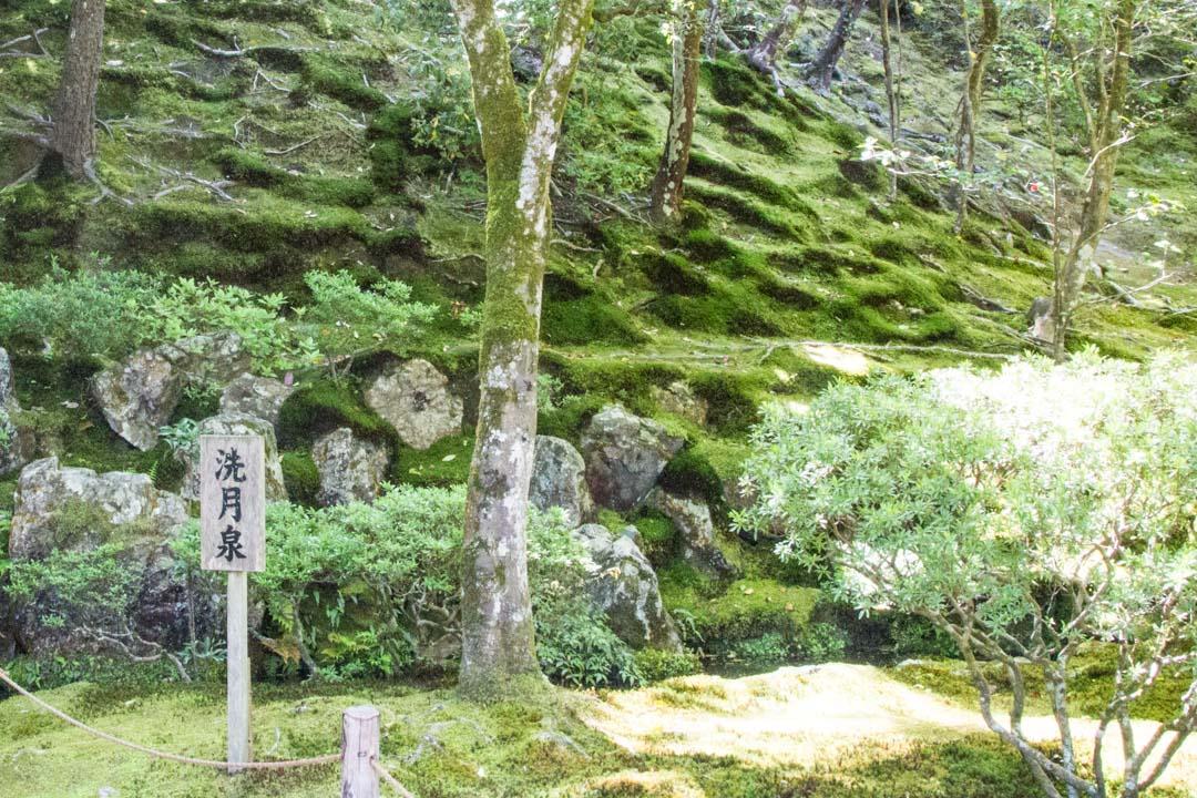 Hopeisen paviljongin temppelin sammalpuutarha Kiotossa Japanissa