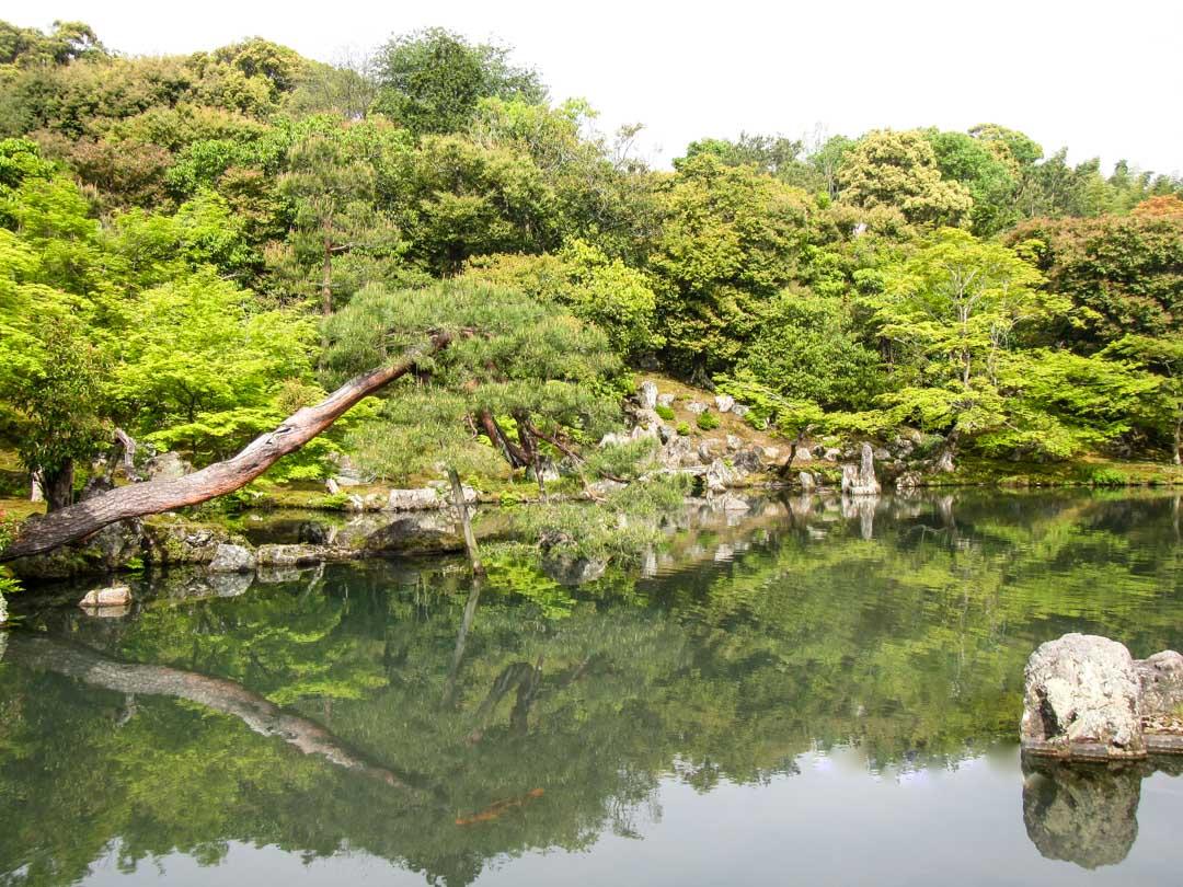 Tenryu-ji temppelin japanilainen puutarha Kiotossa Japanissa