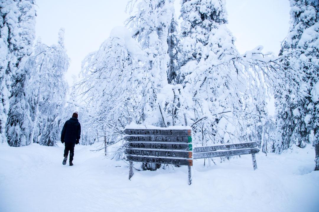 Riisitunturin kansallispuisto ja Riisin Rääpäsy talvella
