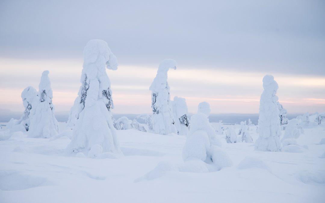 Riisitunturin kansallispuisto talvella