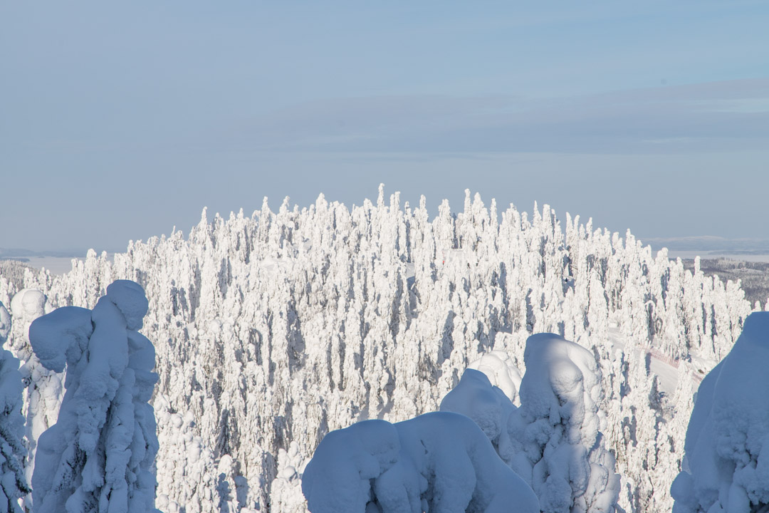 Kolin kansallispuistossa talvella