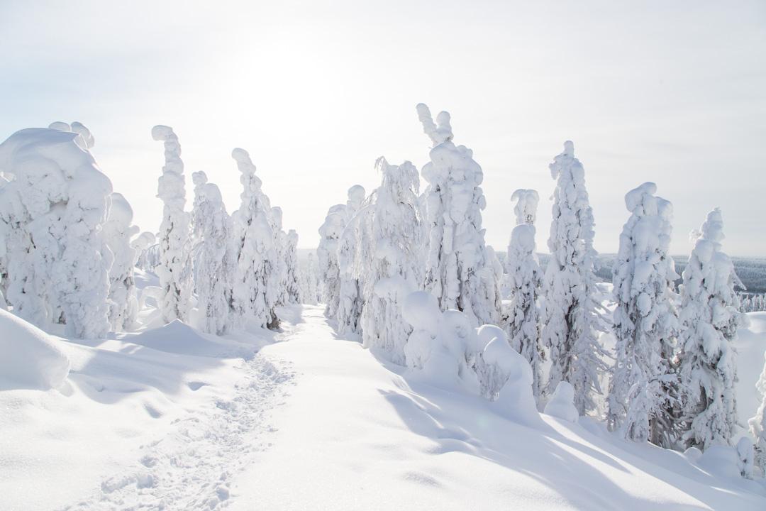 Huippujen kierros Kolin kansallispuistossa talvella