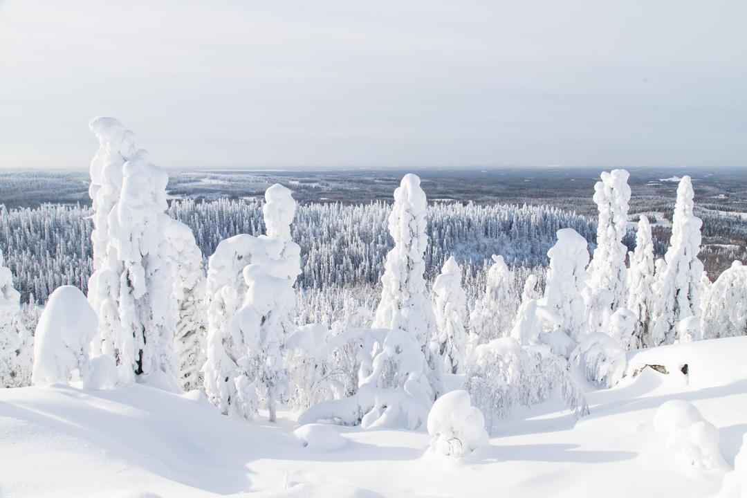 Kolin kansallispuistossa Akka-Kolin näköalapaikalla talvella