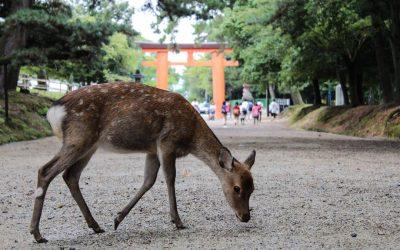 Naran kauneimmat temppelit