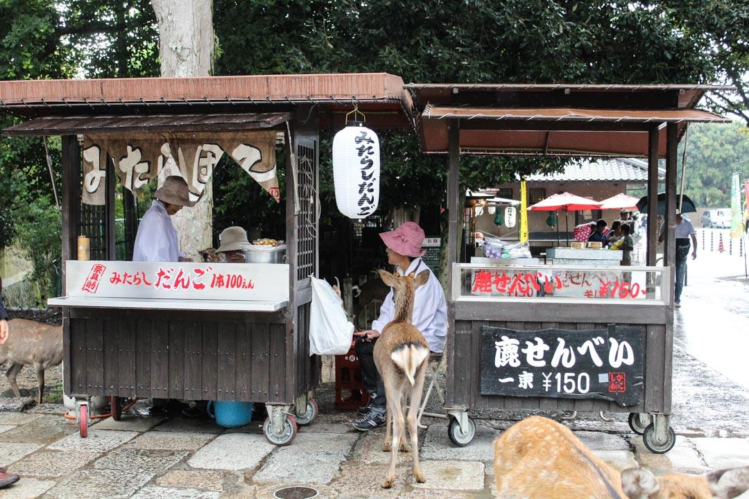 japaninpeura keksikojun luona Narassa Japanissa