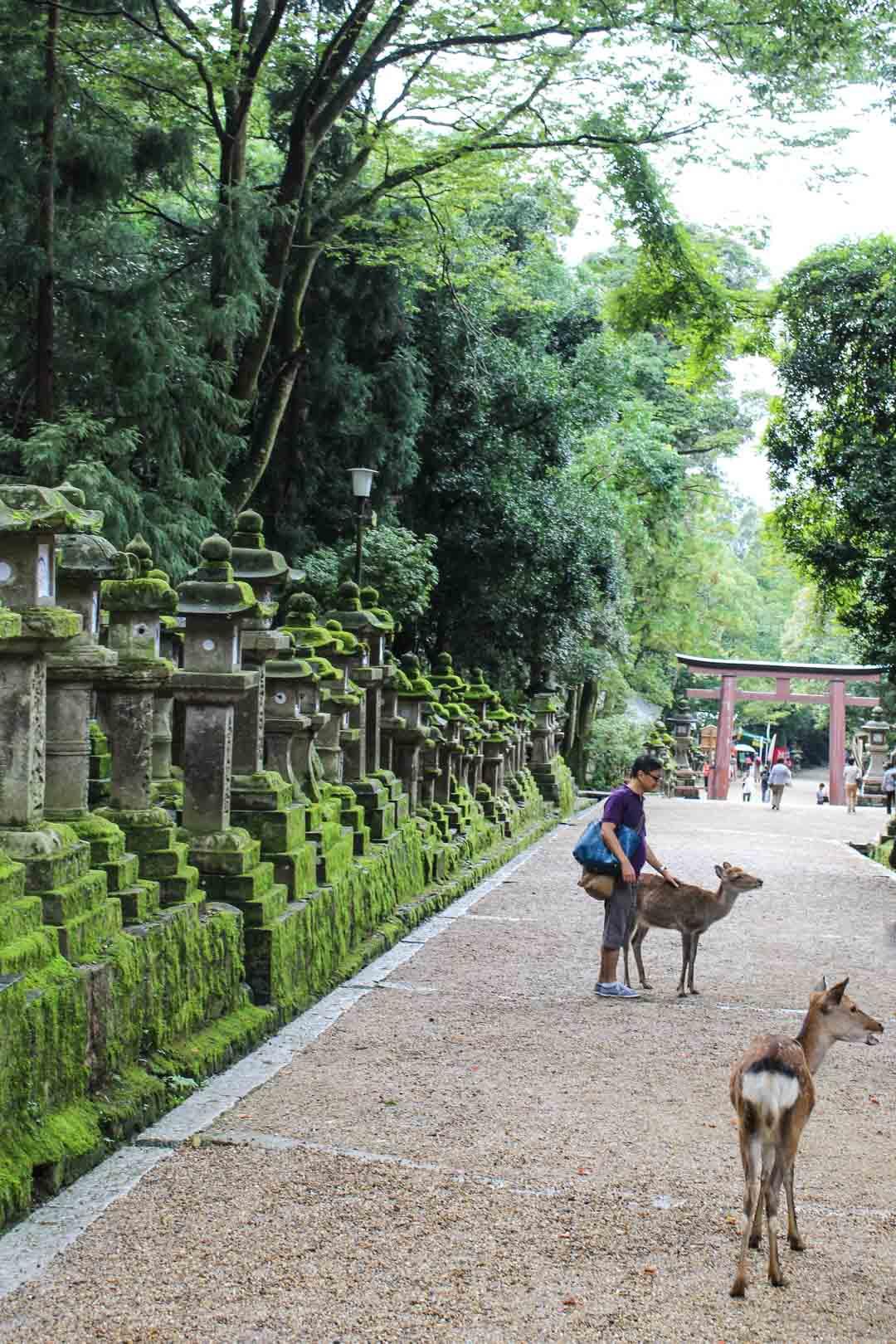 Kasuga Taishan pyhättö Narassa Japanissa