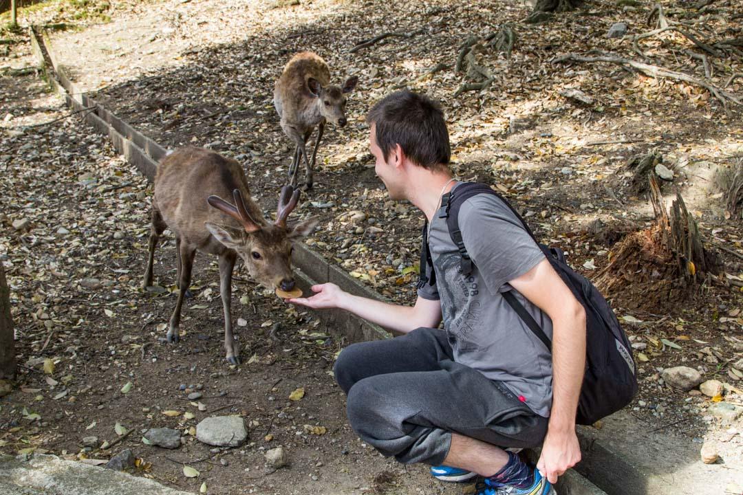 japainpeuroja Narassa Japanissa