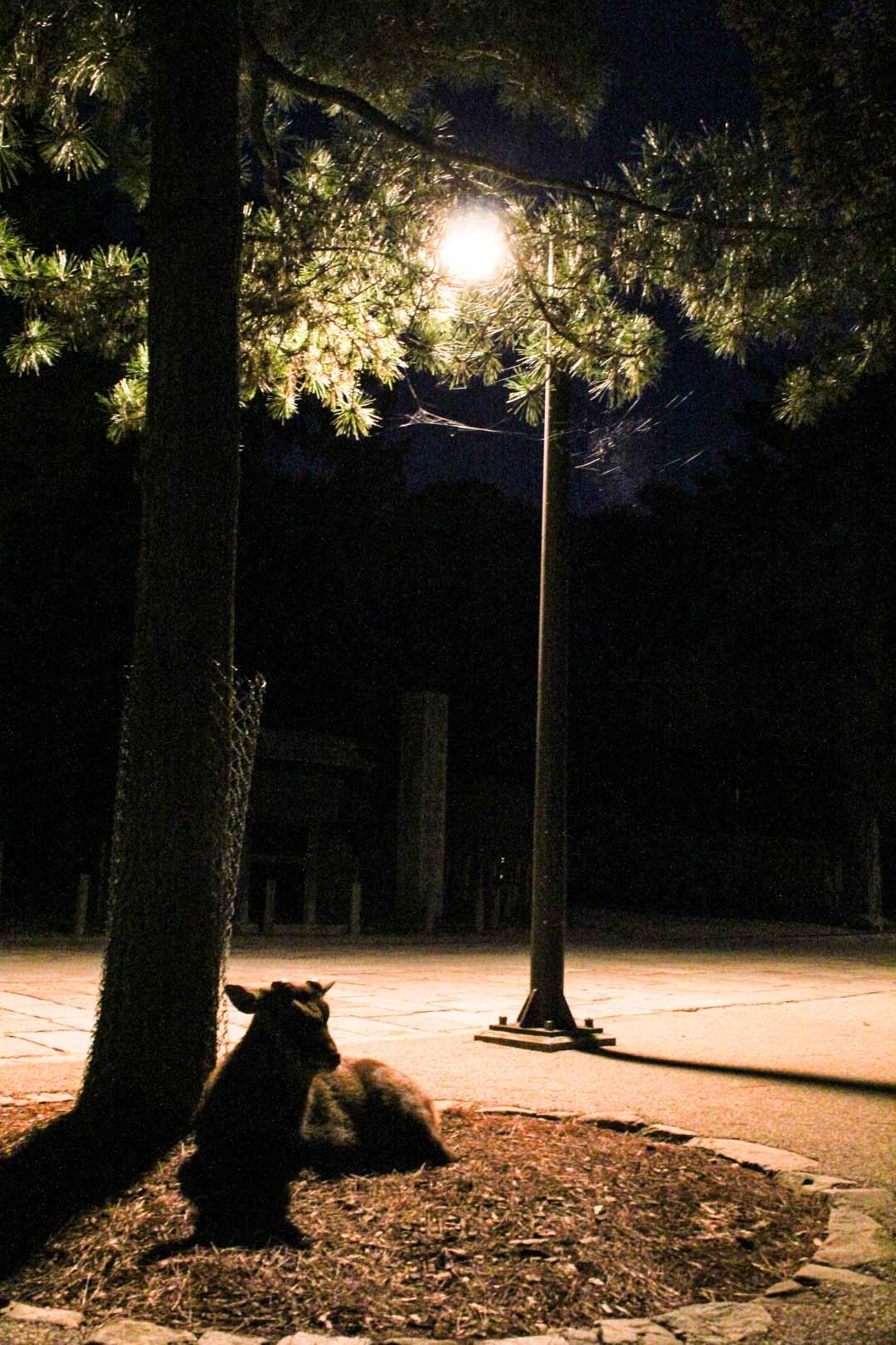 japaninpeura illalla Narassa Japanissa