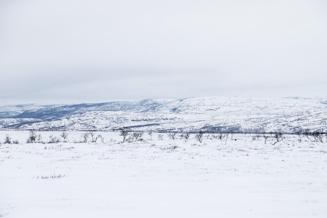 lumikenkäilemässä Kaldoaivin erämaassa Skaidijärven polkua