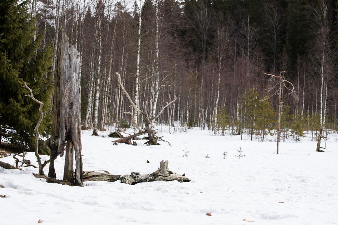 Erä-Eeron piilokoju Lieksassa