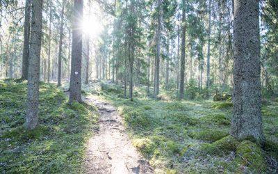 Seitsemisen kansallispuisto – Virkatie