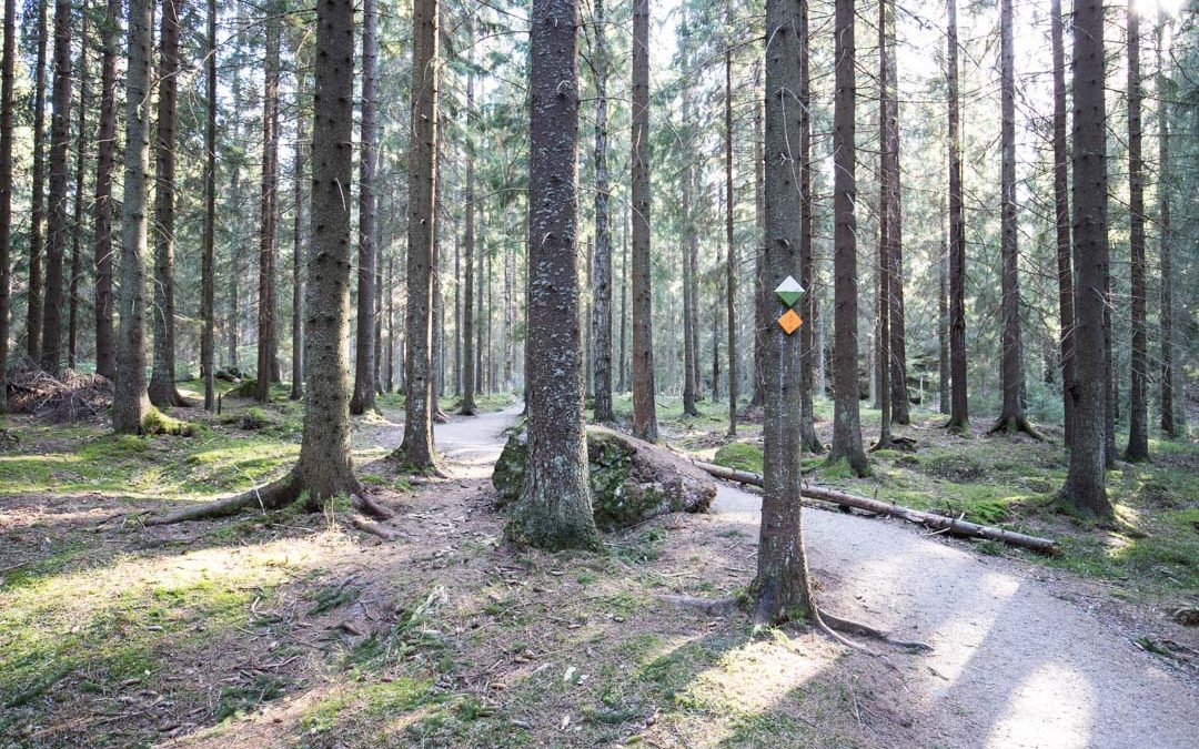 Sunnuntainen iltapäivä Sipoonkorven kansallispuistossa