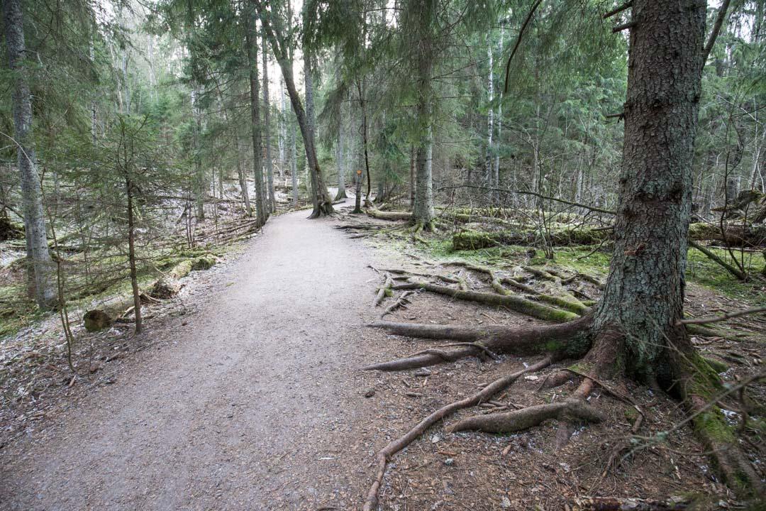 Byabäckenin luontopolku Sipoonkorven kansallispuistossa