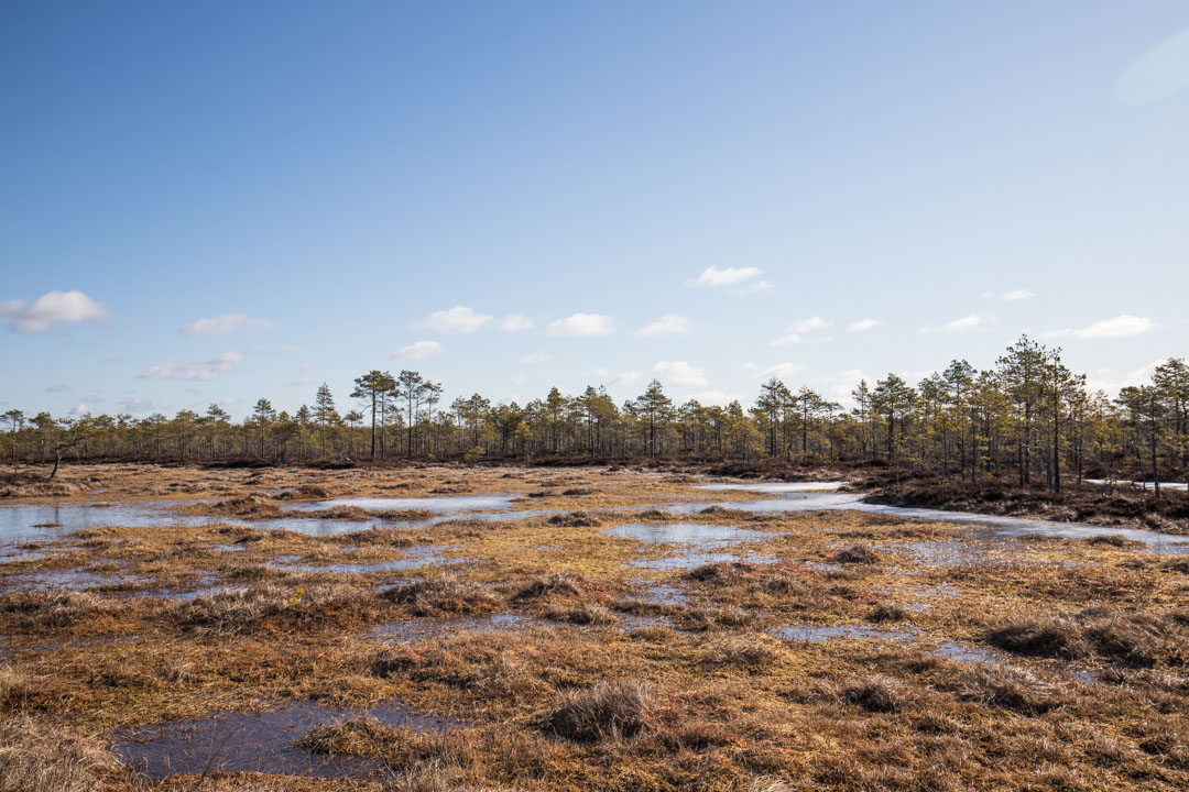 Kauhaneva-Pohjankankaan kansallispuiston Kauhalammin kierros