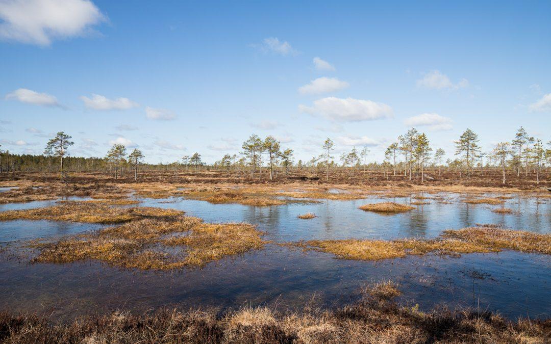 Kauhanevan-Pohjankankaan kansallispuisto – kansallispuistojen aatelia