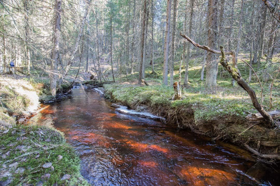 Kauhaneva-Pohjankankaan kansallispuisto Katikankanjonin reitti