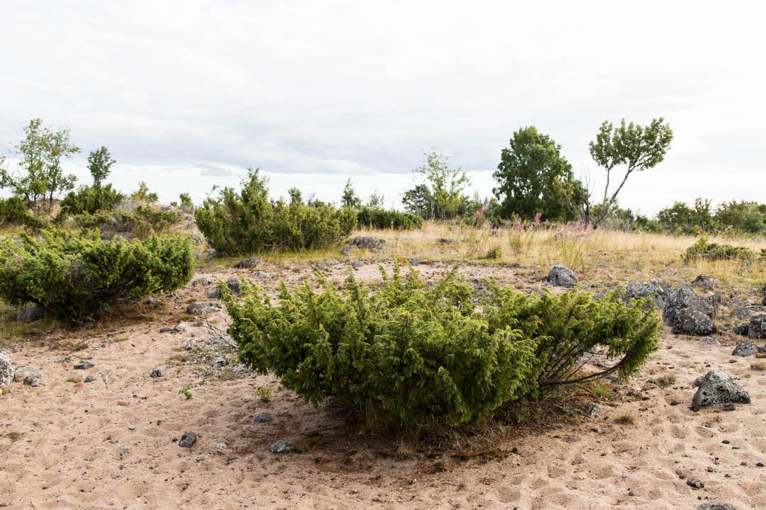 Perämeren kansallispuiston Selkä-Sarven saaren luontoa