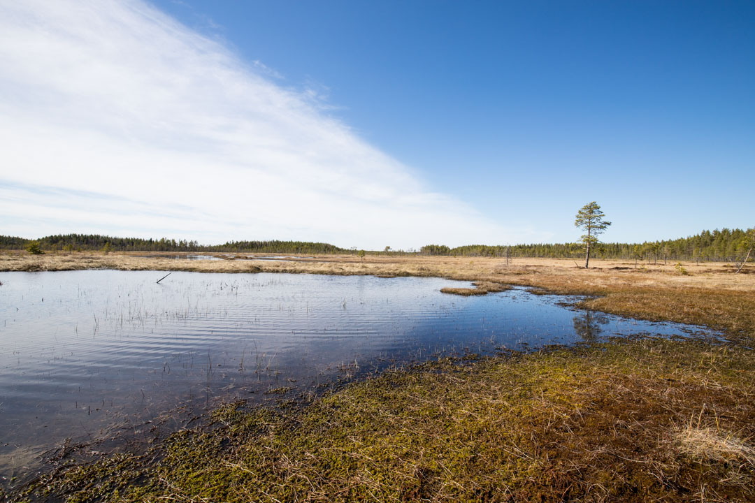 Salamajärven kansallispuisto