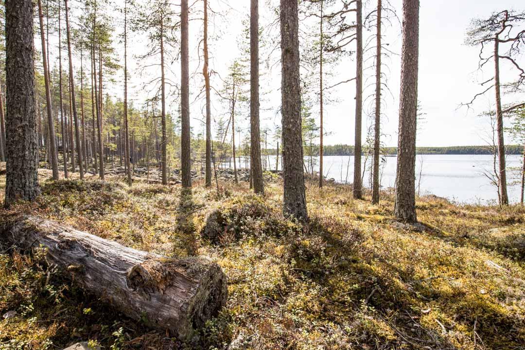 patikoimassa Salamajärven kansallispuistossa