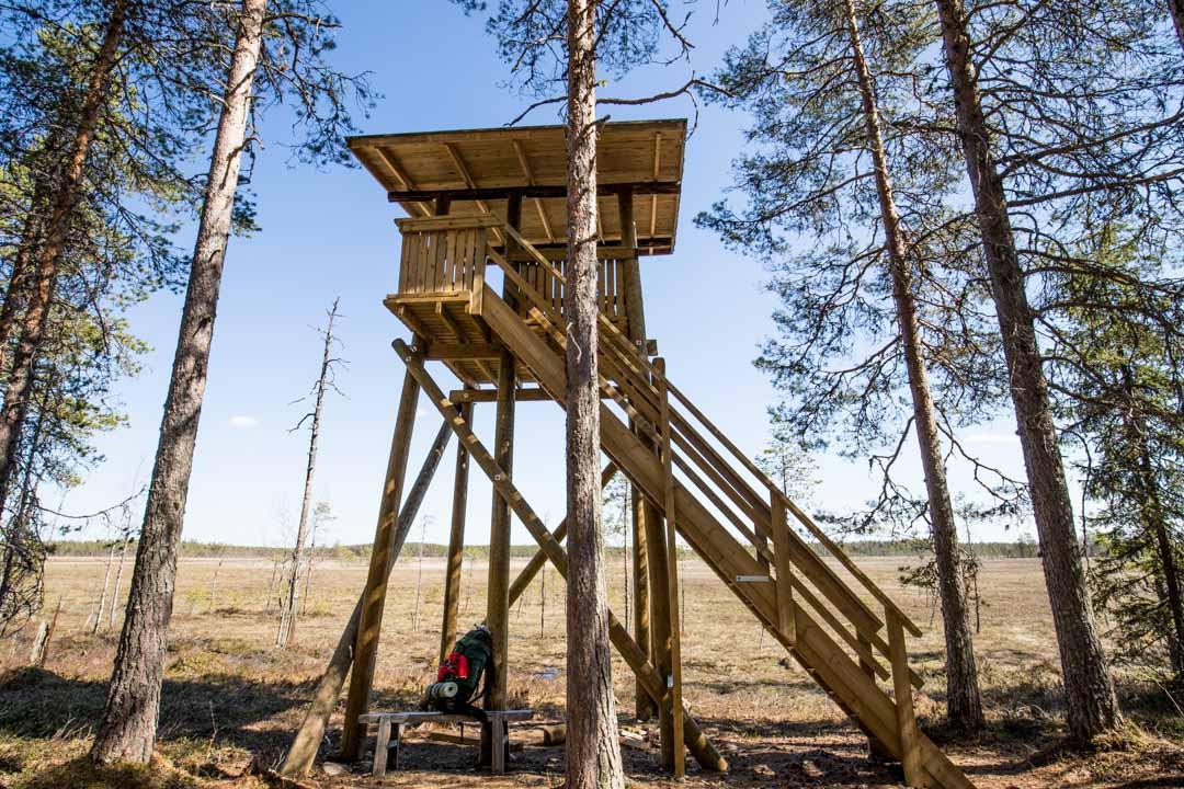 Lintutorni Salamajärven kansallispuistossa