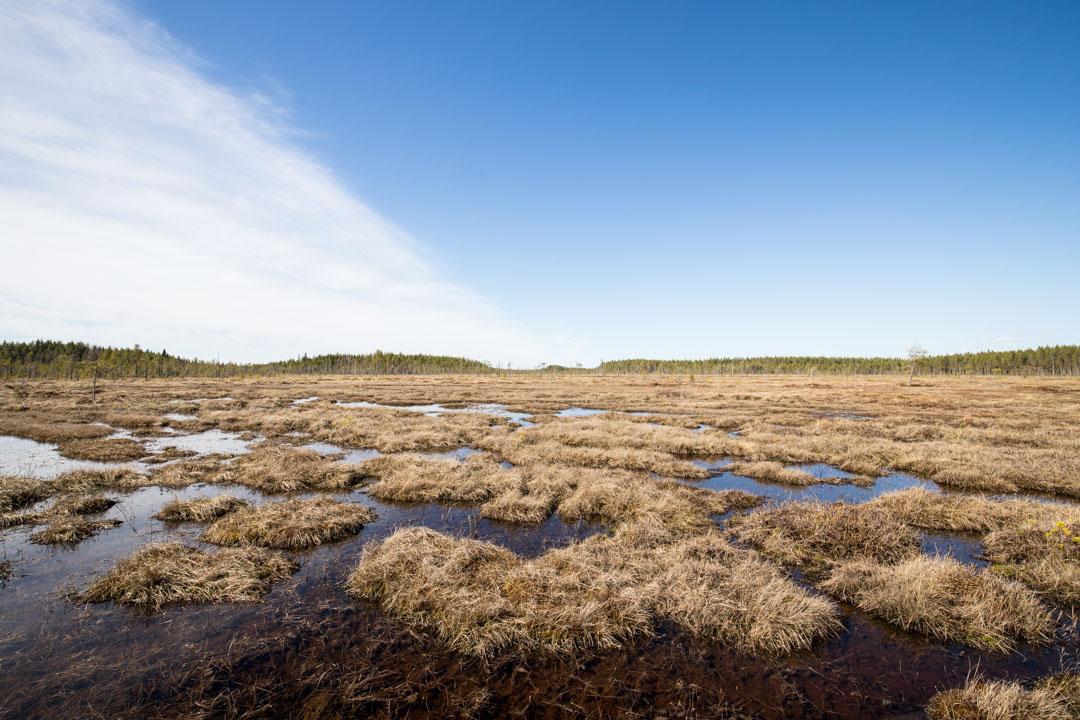 suo Salamajärven kansallispuistossa