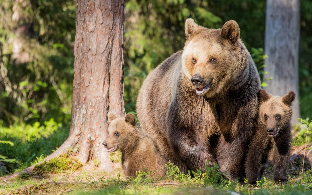 Martinselkonen – karhuparatiisi