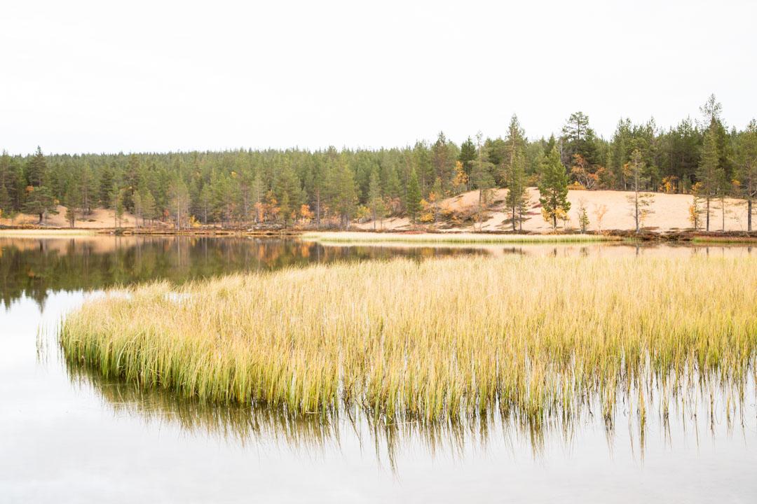 Luulammen alue Urho Kekkosen kansallispuistossa