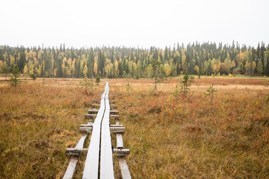 suo Kukatunturin kierroksella Pallas-Yllästunturin kansallispuistossa