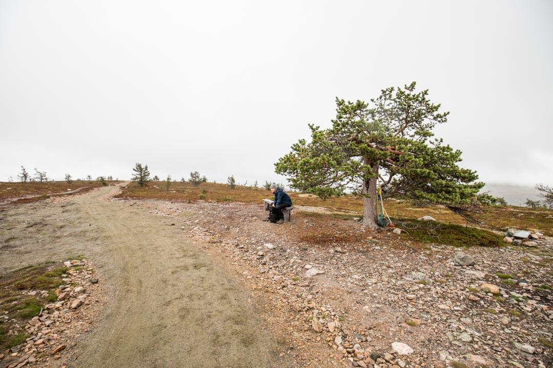 mäntyvanhus Kukastunturin huipulla Pallas-Ylläksen kansallispuistossa