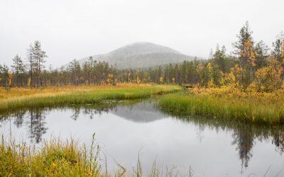Pallas-Yllästunturin kansallispuisto – Kukastunturin kierros