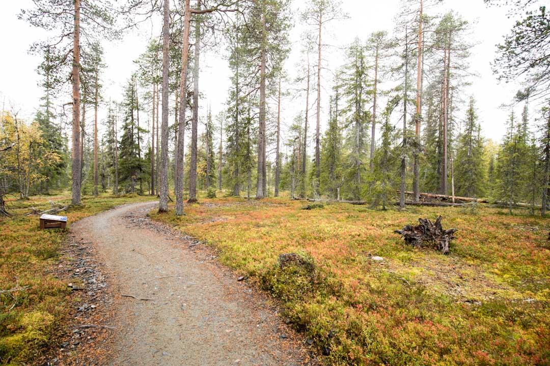 Kukastunturin kierros Pallas-Yllästunturin kansallispuistossa