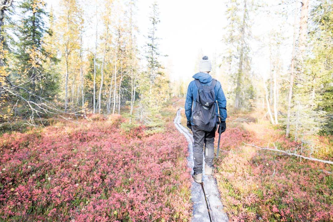 Luoston vaellusluontopolku Pyhä-Luoston kansallispuistossa syysruskassa