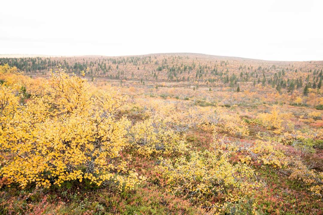 Luulammen polku Urho Kekkosen kansallispuistossa syysruskan aikaan