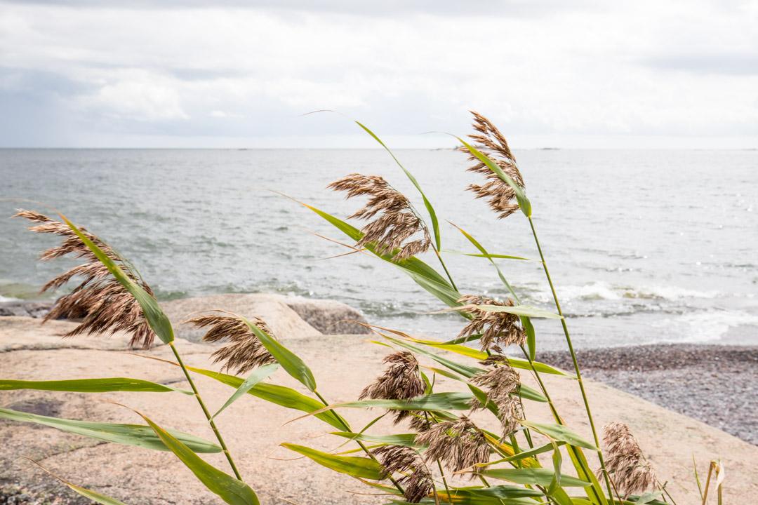 yksityiskohta Jussarön saarelta