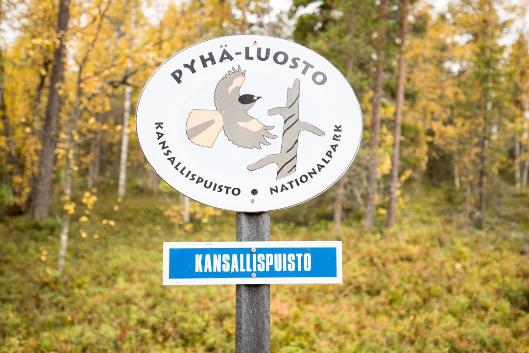 Pyhä-Luoston kansallispuiston logo