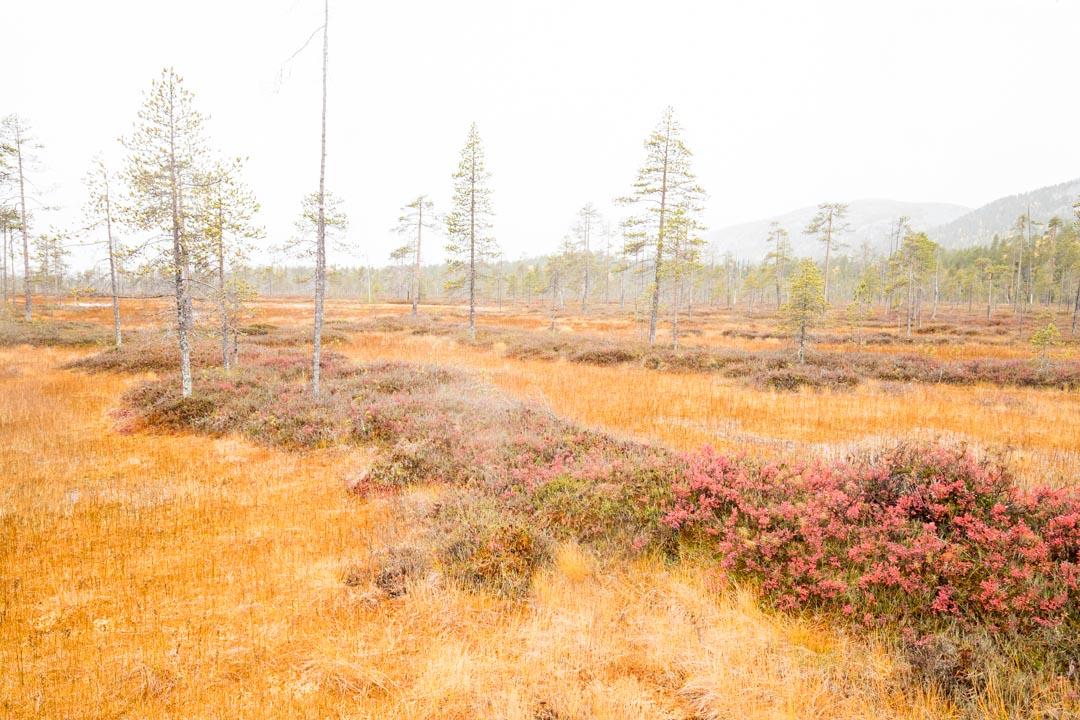 Tunturiaavan luontopolku Pyhä-Luoston kansallispuistossa