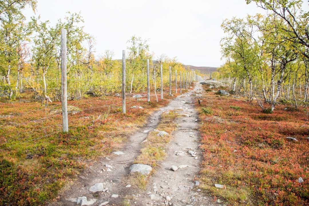 patikoimassa syksyllä ruska-aikaan Mallan luonnonpuistossa