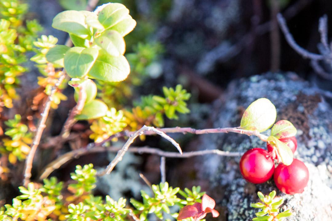 Sompion luonnonpuiston kasvistoa