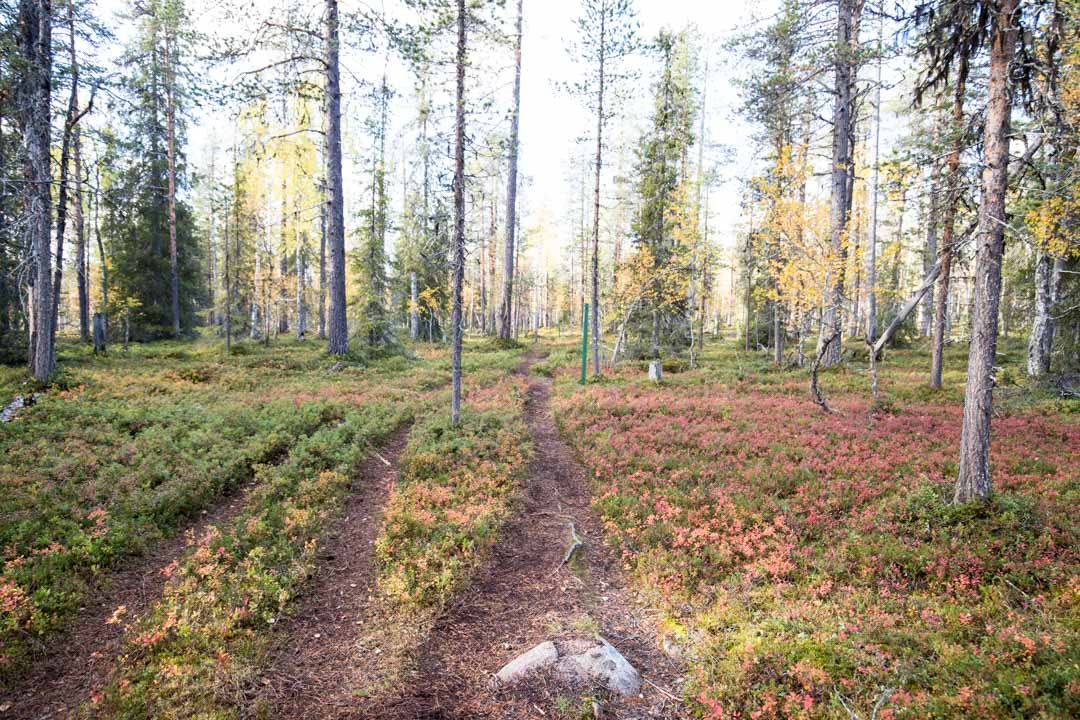 Sompion luonnonpuiston rengasreitti